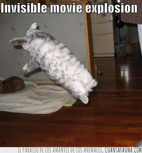 explosion,gato,heroe,invisible,película
