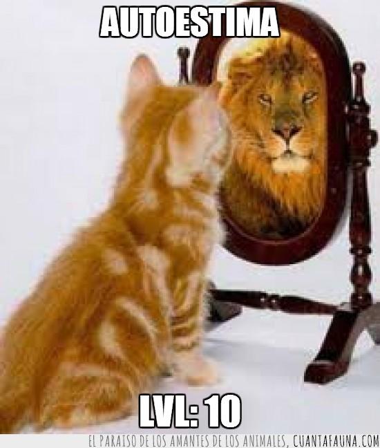 blanco,espejo,gato,leon