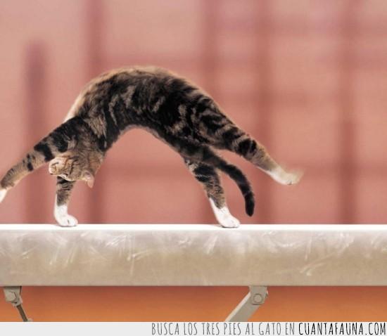 Cat,flexibilidad,gato,olimpiadas,rio