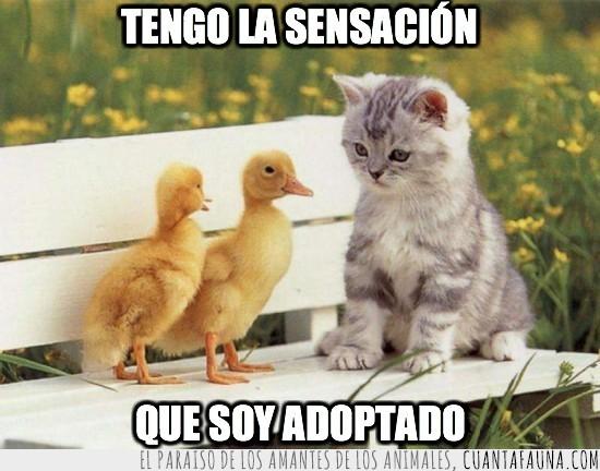 adoptado,bancos,gatos,patos