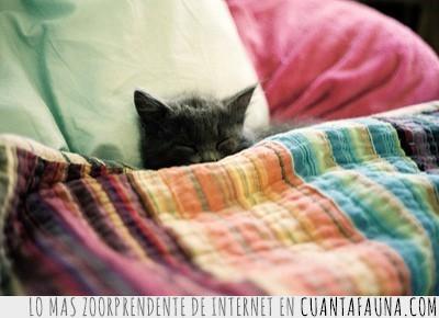 arropado,cama,frío,Gato,invierno