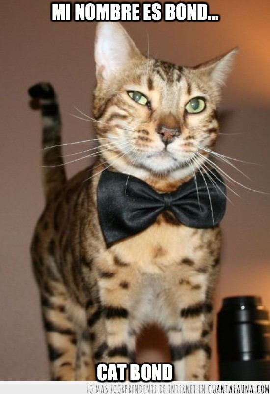 elegante,gato,james bond,pajarita
