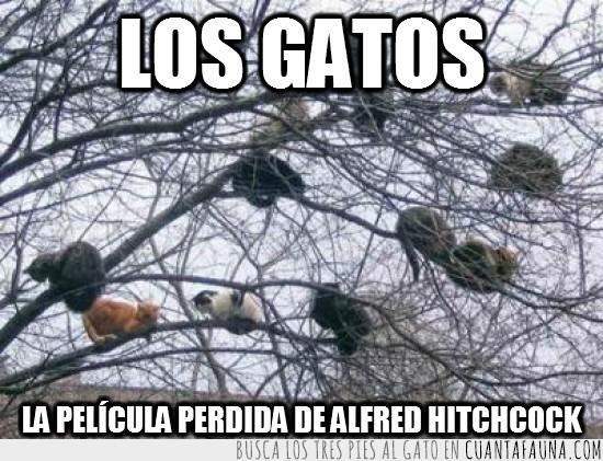 arbol,gatos,Hitchcock,Los pájaros,pelicula,ramas