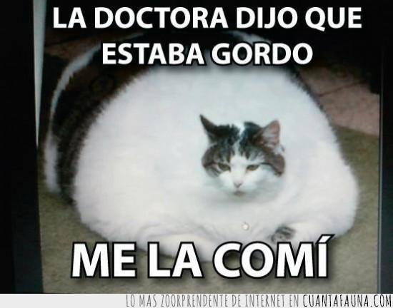 comer,doctor,gato,gordo,obeso