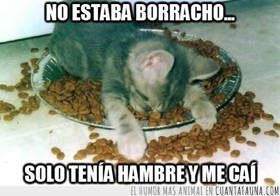 borracho,caer,comida,dormir,gato,hambre,plato