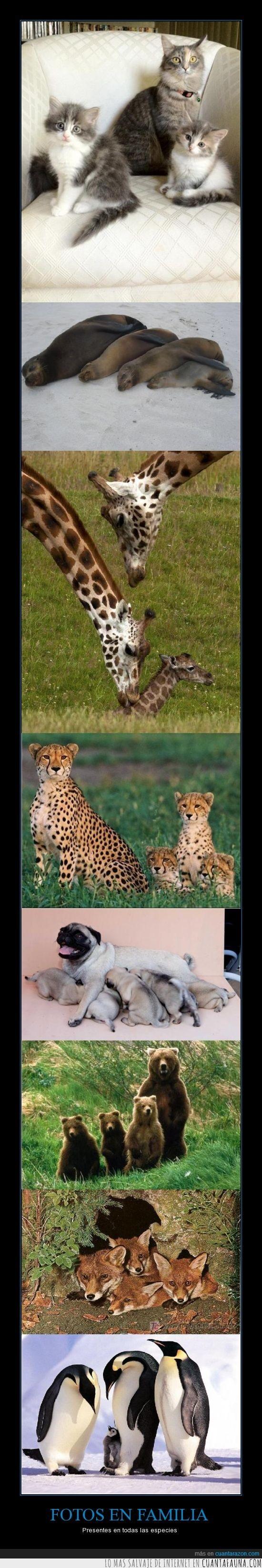 caniche,focas que no son personas gordas,gatos,guepardos,jirafas,osos casi tan peludos como yo,zorros