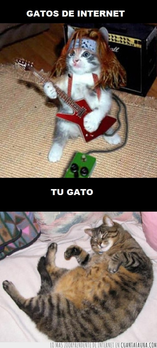 gato,gatos,graciosos,internet,vagos