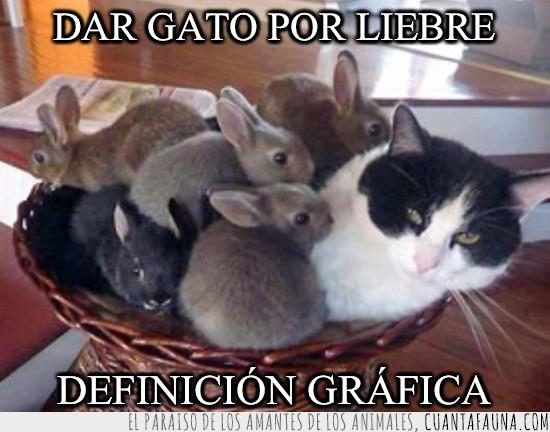 conejos,Gato,liebre