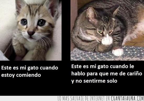 amor,comida,emociones,Gato