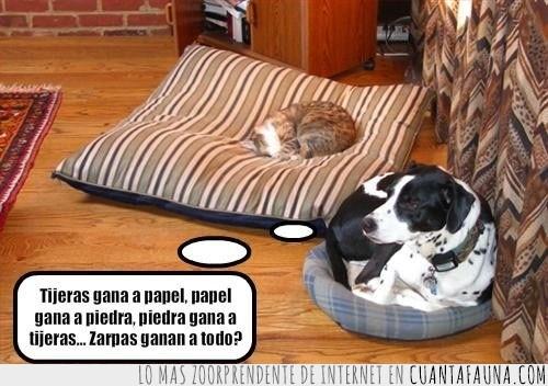 abusar,cojin,dormir,engañar,gato,pensativo,pequeño,perro,piedra papel tijeras