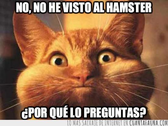 Comilón,Gato,Hamster,preguntar