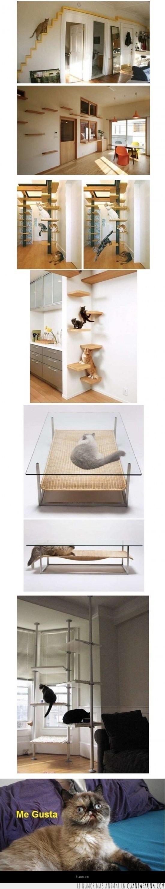 accesorios,felino,gato,gatuno,me gusta,muebles,paraiso
