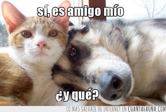 abrazos,amigos,gato,juntos,perro