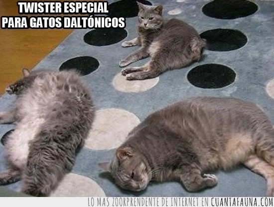 alfombra,estirados,topos,tumbados,twister