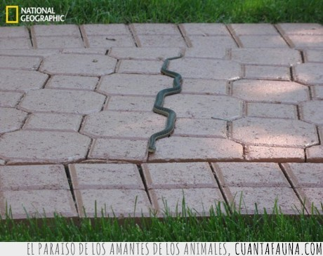 mentira,naturaleza,piso,ralla,seguir,serpiente,suelo