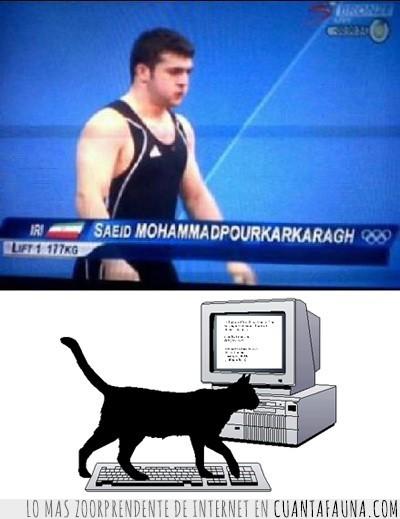 gato,juegos olimpicos,largo,nombre,olimpiadas,teclado