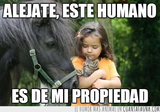 caballo,dueño,gato,humano,niña,propiedad