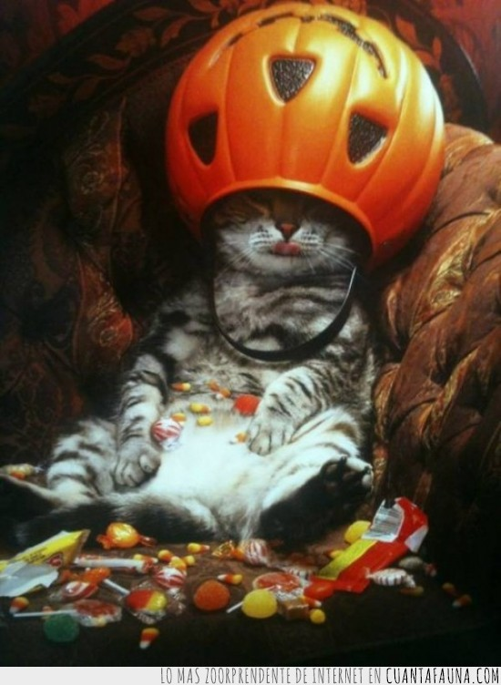 caramelos,chucherias,dulces,gato,gordo,halloween