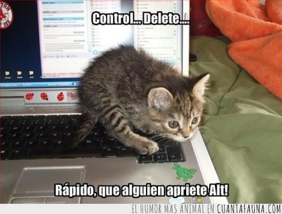 alt,control,delete,laptop,servicio,supr,teclado,tecnico