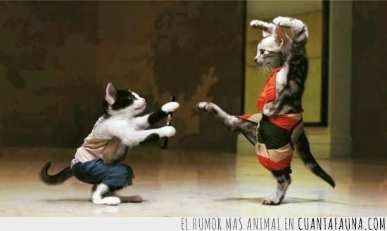 artes marciales,combate,disfraces,karateka,lucha,ninja,pelea