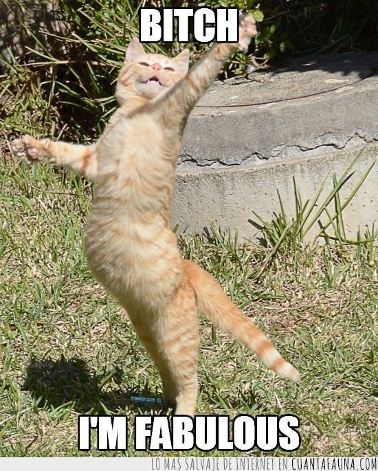 Fabuloso,fabulous,gatitos,gato,ratones
