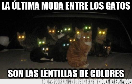 gatos,lentillas de colores,luces,miedo,ojos,terror