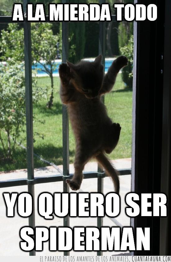 gato,puerta,quiero ser,red,reja,spiderman