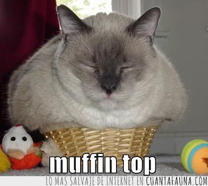 cat,cesto,cupcake,gato,magdalena,muffin