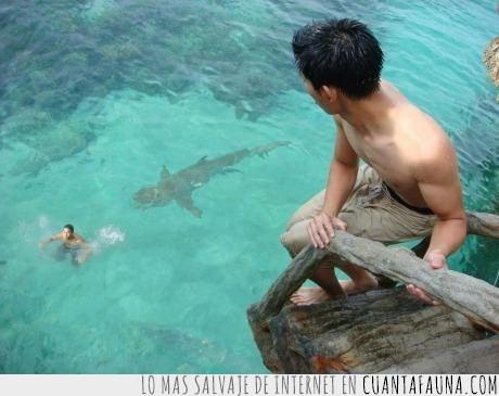 amigo,lol,matar,morir,tiburon