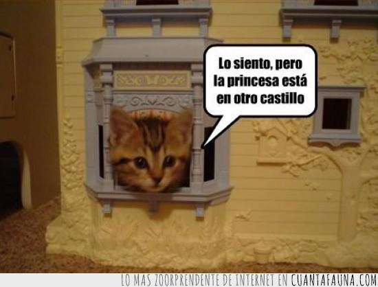 bros,castillo,gato,mario,princesa