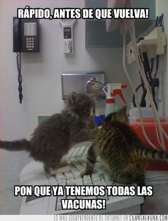 gatitos,ordenador,teclado,vacunas,veterinario