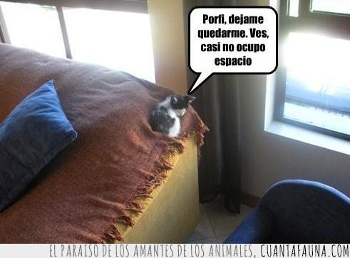cachorro,cama,esquina,pequeño,quieto,sofa
