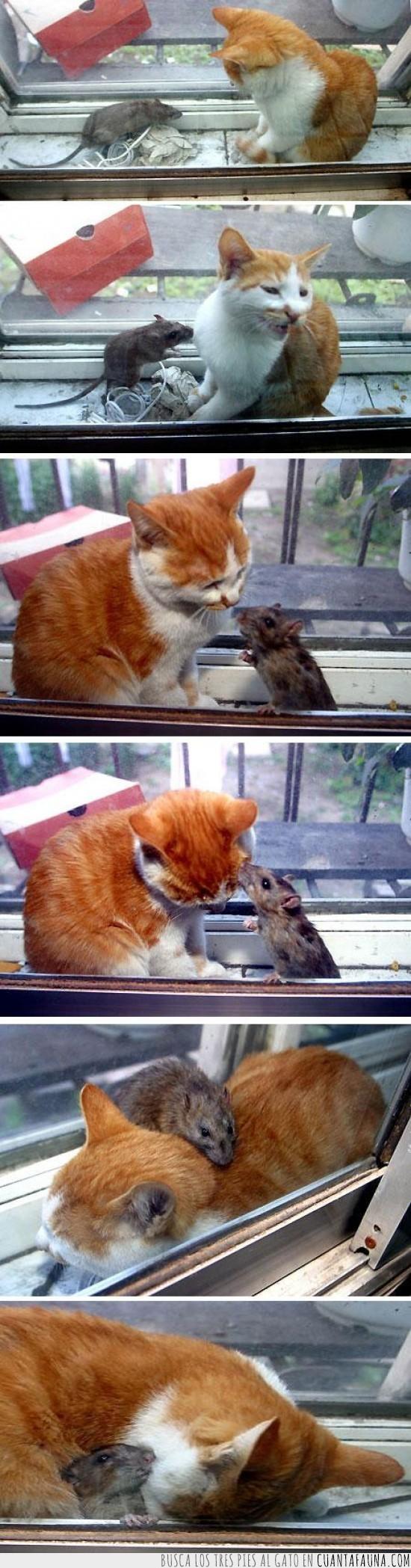 amigo,fail,gato,pequeño,raton