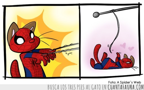 gato,heroe,jugar,spidercat,spiderman,telaraña