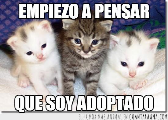 adopcion,adoptado,atrigrado,blanco,hermanos