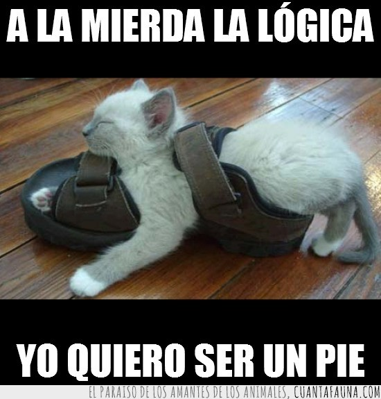 cachorro,chancla,dormir,incomodo,pie,sandalia