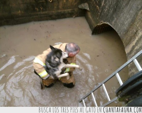 Bombero,Desastre,Huracán Sandy,perro,rescate,Siberian Husky