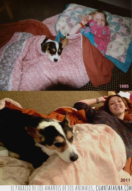 amistad,amistad perruna,mejor amigo del hombre,perro