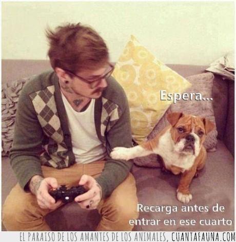 antes,ayuda,cuarto,entrar,espera,gamer,hipster,perro,play,recarga