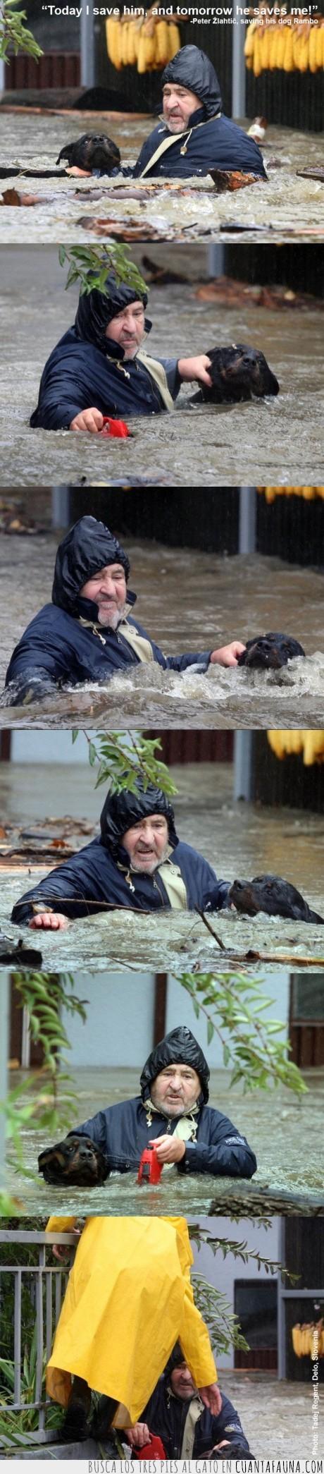inundación,perro,salvar,Slovenia,vida