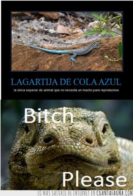 Reproduccion asexual del dragon de komodo