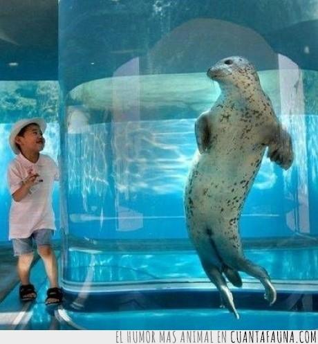 acuario,foca,japones,pescado,pez