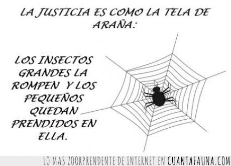 araña,escapar,España,injusticia,jodidos,Justicia,pobres,ricos,tela