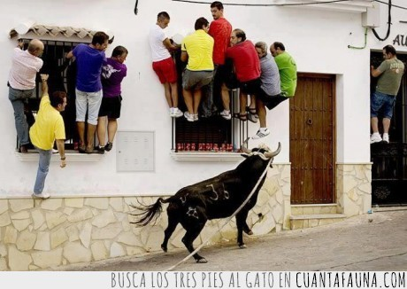 calle,cobarde,empedrado,subir,toro,ventana