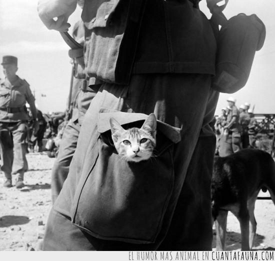 bolsillo,en guerra,gatito,soldado,valiente