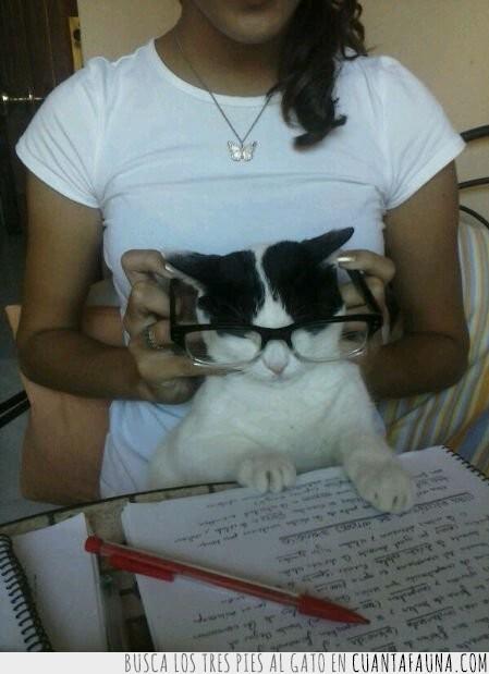 estudiar,exámenes,gafas,hipster,leer
