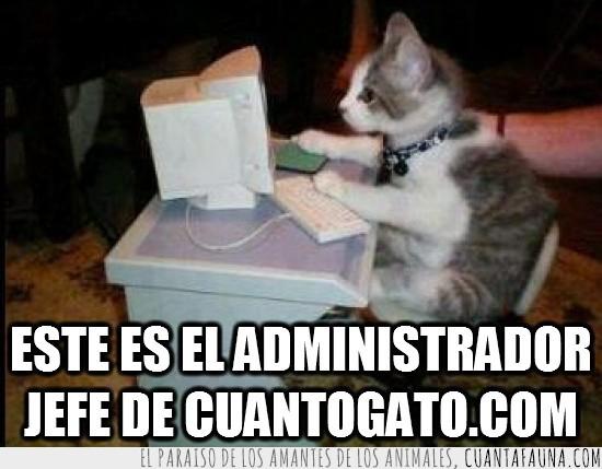 administrador,computador,cuantogato,escritorio,gato,ordenador,pc