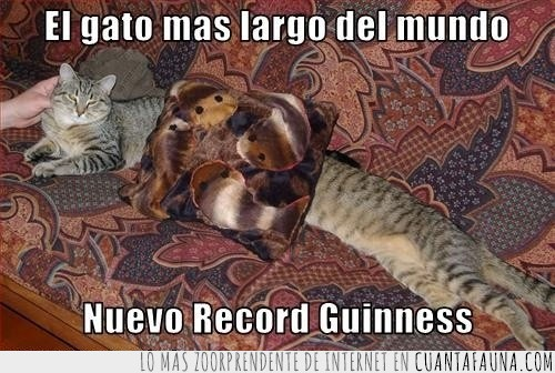 cojin,dos gatos,largo,longitud,record,sofa