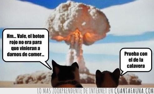 apocalipsis,bomba,botón,calavera,nuclear,rojo