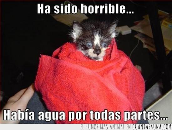 agua,baño,horrible,susto,toalla